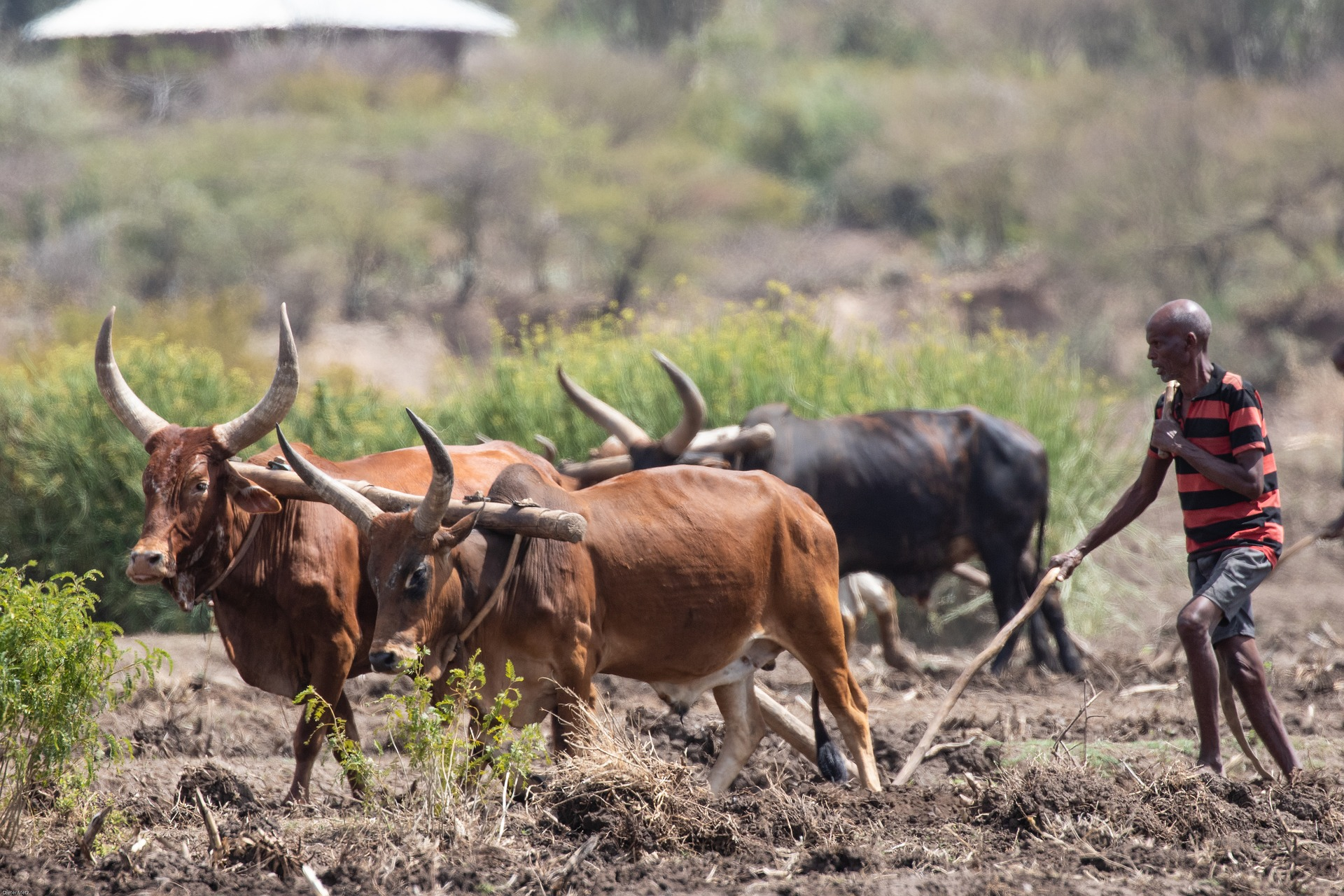 Bauer in Äthopien